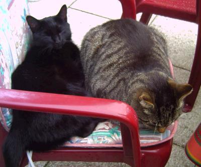 woran erkennt man ob es eine katze oder ein kater ist. Black Bedroom Furniture Sets. Home Design Ideas