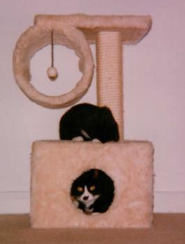 braucht eine katze einen kratzbaum. Black Bedroom Furniture Sets. Home Design Ideas