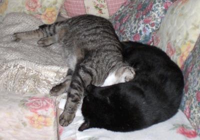gelbsucht bei katzen wie lange
