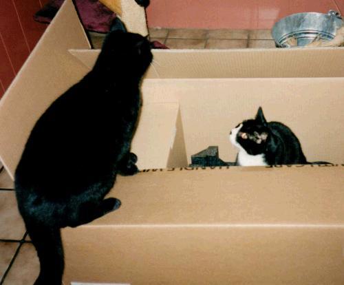 spiele mit und f r katzen katzenspiele. Black Bedroom Furniture Sets. Home Design Ideas