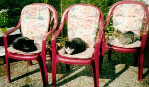 gelbsucht bei katzen ansteckend