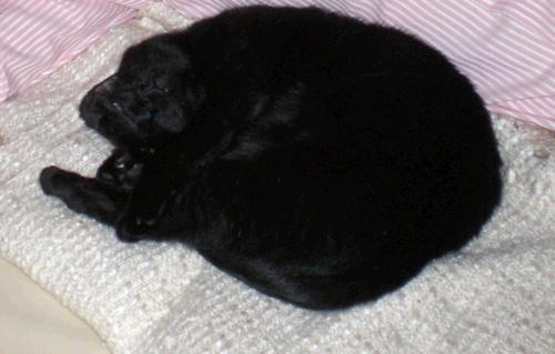 Darf die Katze in Schlafzimmer und Bett?